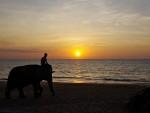Sunset on the beach with an elephant, Khao Lak