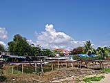 Squid Drying Operation just off the Beach, Pranburi