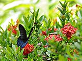 Butterfly at Thale Ban park